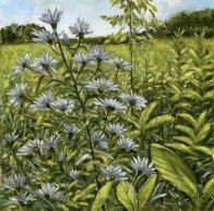 'Asters in Field, Mono Cliffs' (2010) by Jamie Kapitain, oil on canvas board, 8x8 inches.