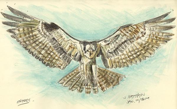 'Osprey' (2014) by Jamie Kapitain.