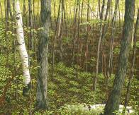 'Rolling Woods Near Salmon Lake' (2008) by Jamie Kapitain. Oil on canvas, 30x36
